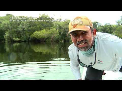 Na Pegada do Fly - Rio Negro em Repiquete e Tucunarés no Fly