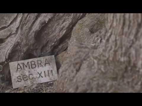 #XylellaReport di Marilù Mastrogiovanni - 3a Puntata
