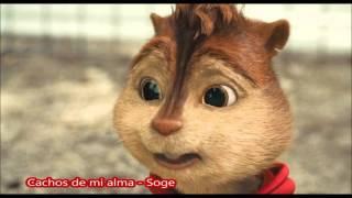 Cachos de mi alma  Soge - Alvin y las ardillas