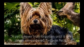 Heartfelt Quotes About Dog Loss & Grief