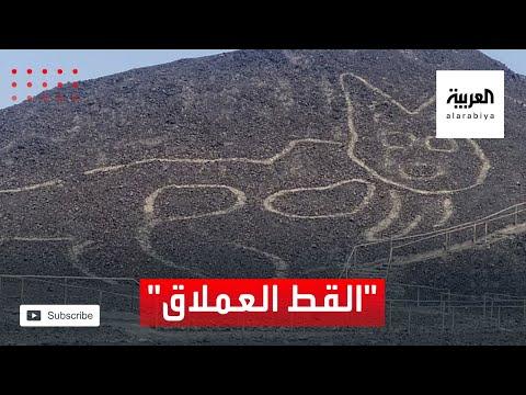 العرب اليوم - شاهد: اكتشاف مذهل.. قط عملاق عمره 2100 عام