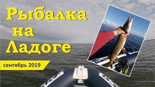Рыбалка на ладожском озере осенью c берега