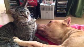 пит & кот