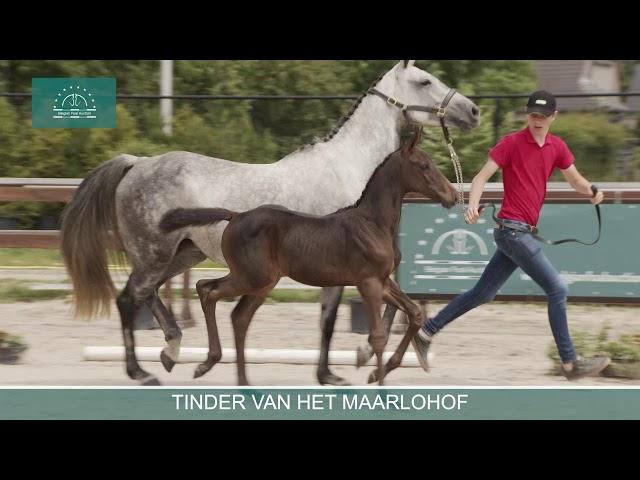 TINDER V/H MAARLOHOF