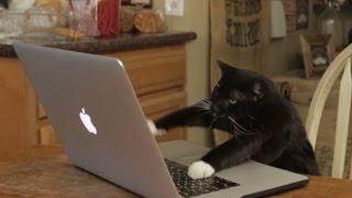 Aaron's Animals - Facebook Hacker - Video Youtube