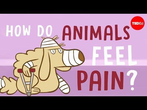 Jak zvířata vnímají bolest?