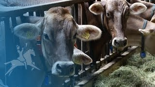 Hof-Milch: Neue Molkerei für Heumilch im Allgaeu
