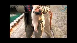 Платная рыбалка по новой риге