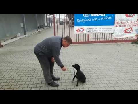 Pies, który potrafi liczyć