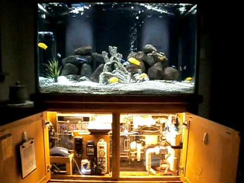 filtration would be less maintenance on an 8 ft tank? | Yahoo Answers