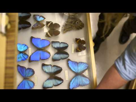 Behind the Scenes: Entomology