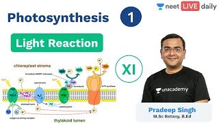 NEET: Photosynthesis - L 1 | Light Reaction | Class 11 | Unacademy NEET | Pradeep Sir
