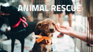 how to start a rescue or other animal nonprofit