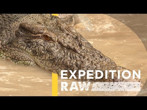 This video shows you what it's like to be a crocodile's prey