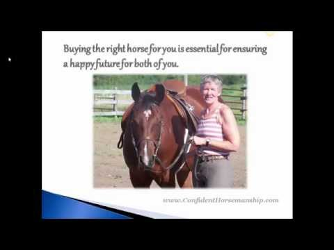 Horse Buying Tips: The 3 Biggest Mistakes To Avoid If You Want to Buy the Right Horse for You