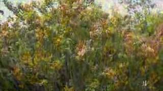 北海道の花、ハマナスが見頃の百合が原公園in札幌
