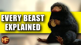 Every Beast We've Seen So Far in Fantastic Beasts 1/2 (45 Creatures Explained)