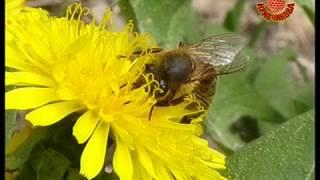 Смотреть онлайн Советы для начинающих по пчеловодству весной