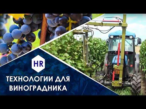 Технологии для виноградников. Хитеч Ревиев.