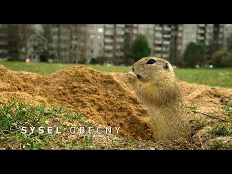 Planeta Česko Trailer