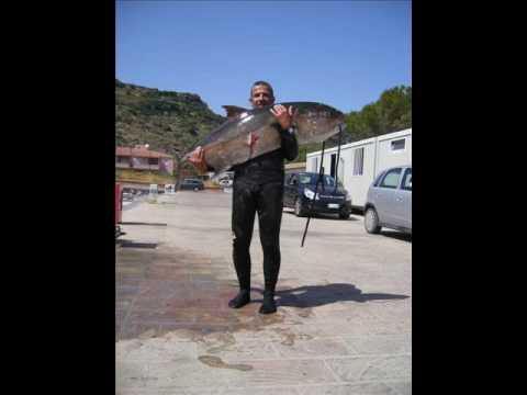 Pesca di forum di korotn