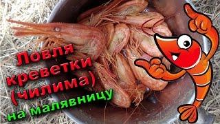 Чем ловят морскую креветку