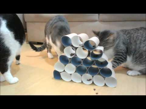 p/ gatos: brinquedo fácil