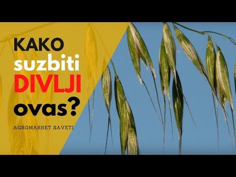 Zaštita pšenice od divljeg ovsa (Herbicid: Pallas)