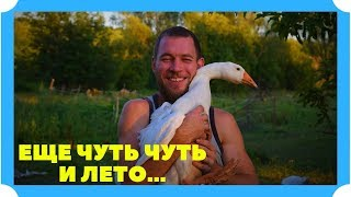 ФОТО ПОДБОРКА! Жизнь животных в деревне. Насладись природой
