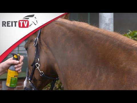 Pferdepflege - Produkttest Fliegenschutz