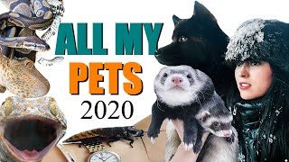 ALL OF MY PETS IN ONE VIDEO 2020 | EMZOTIC (And Huge Life Updates)