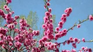 Antonio Vivaldi - The Four Seasons- Spring- Allegro
