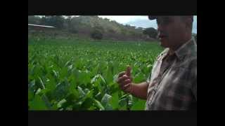 Cigar Safari: Pelo De Oro Fields With Don Pepin & Jaime Garcia