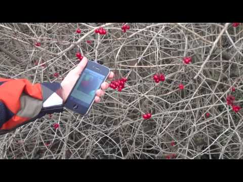 Video of iForest - Trees and shrubs