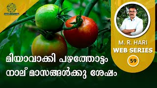 Resilience of Miyawaki Fruit Forest After 4 Months