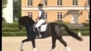 Video von Akribori