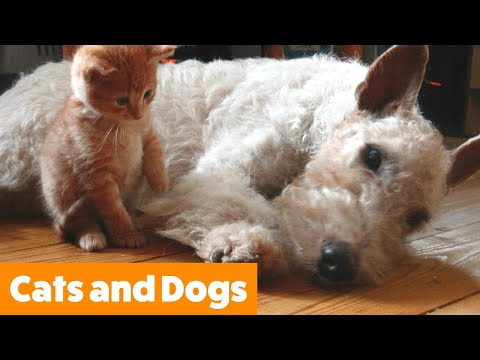 Cutest Dogs and Cats | Funny Pet Videos