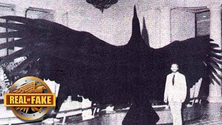 BIGGEST BIRD IN THE WORLD - real or fake?