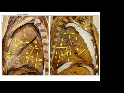 Segmenty oskrzelowo-płucne