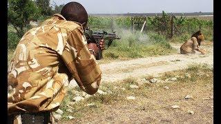 Ботсвана. Львы зашли в деревню!!! Африка, дикая природа. Сафари. Кругосветка не круиз