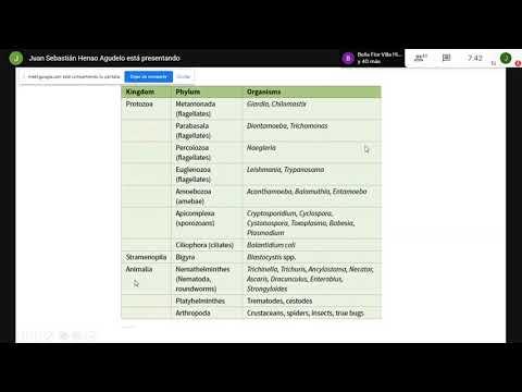 Az enterobiosis oka a szuszpenziónak