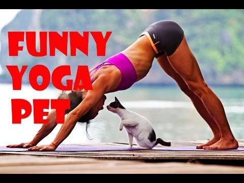Funny Pet Video - Funny Pet Interrupts Yoga Compilation 2016