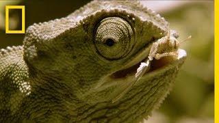 Chameleon Pi Unstoppable Arguments