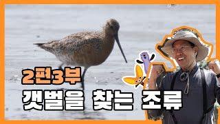 [국립생태원] 생태교육 2편 3부_갯벌을 찾는 조류