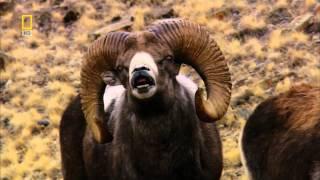 Смотреть онлайн Фильм о природе России: Сибирь
