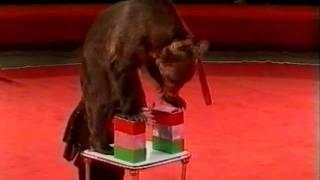Смотреть онлайн Цирковой номер с дрессированными мишками