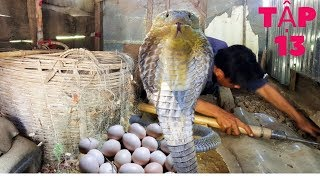 Catching Snake Episode 13: Find the chicken egg thief  | Hunting Catching TV
