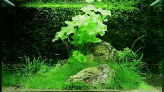 Оформление аквариума на 100 литров от Tropica