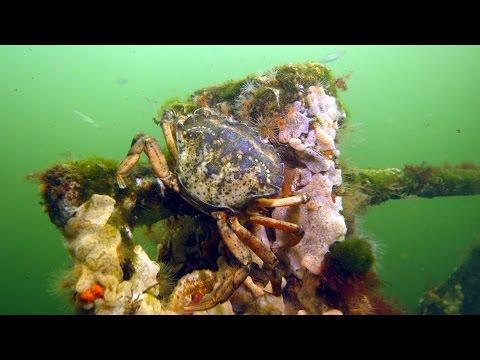 Tauchen im Grevelinger Meer 2014, Grevelinger Meer,Niederlande