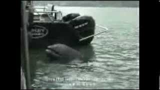SFX Studio Inc. Behind the scene of building an animatronic killer whale
